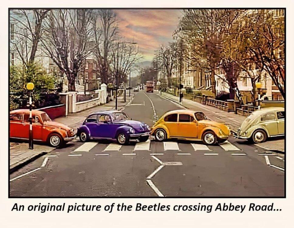 Beetles.thumb.jpg.5949ddec5f0ab747aaf78ffef25aa692.jpg
